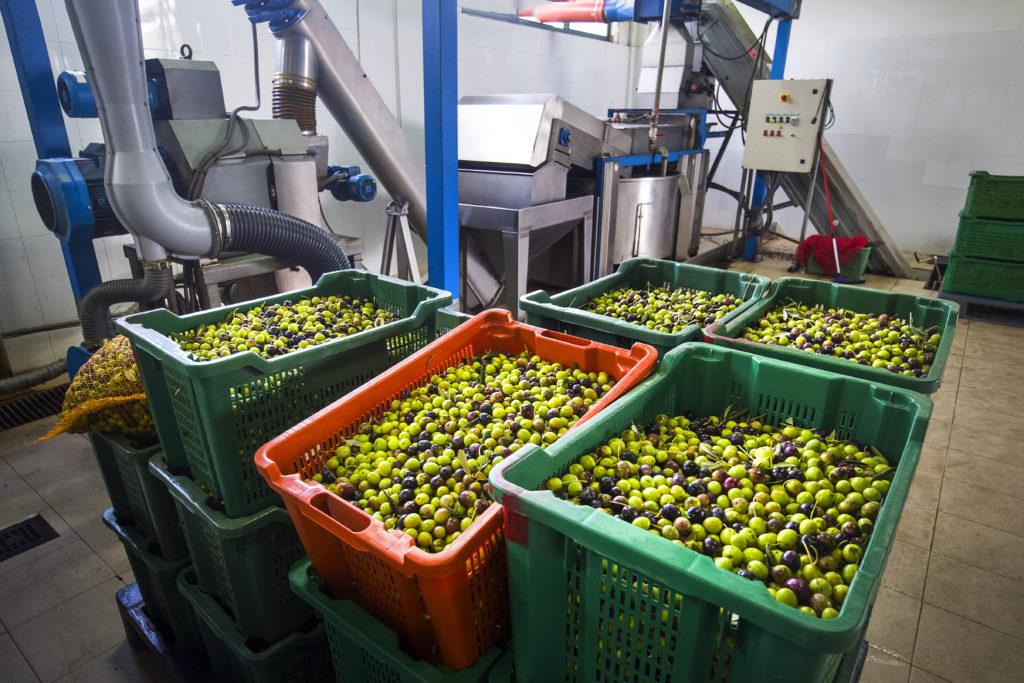 Pogon za proizvodnju maslinovog ulja